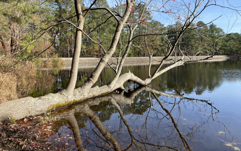 Reservoir Park in Southern Pines